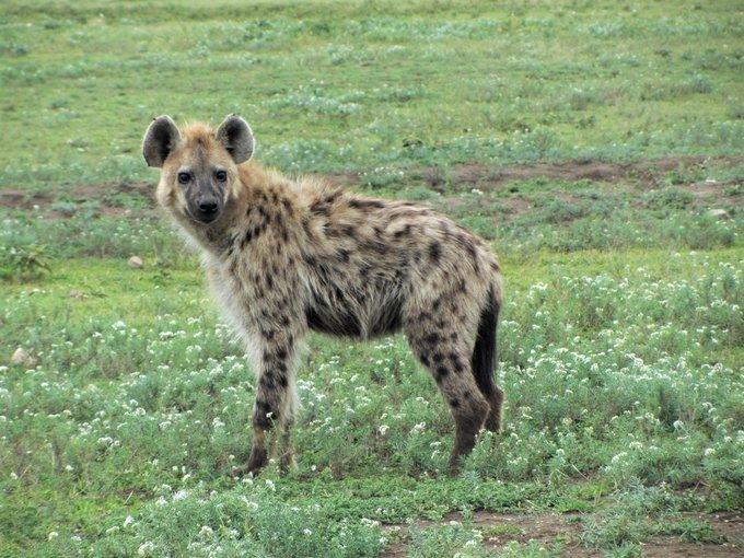 Lake & Crater Lodge Safari - Tour