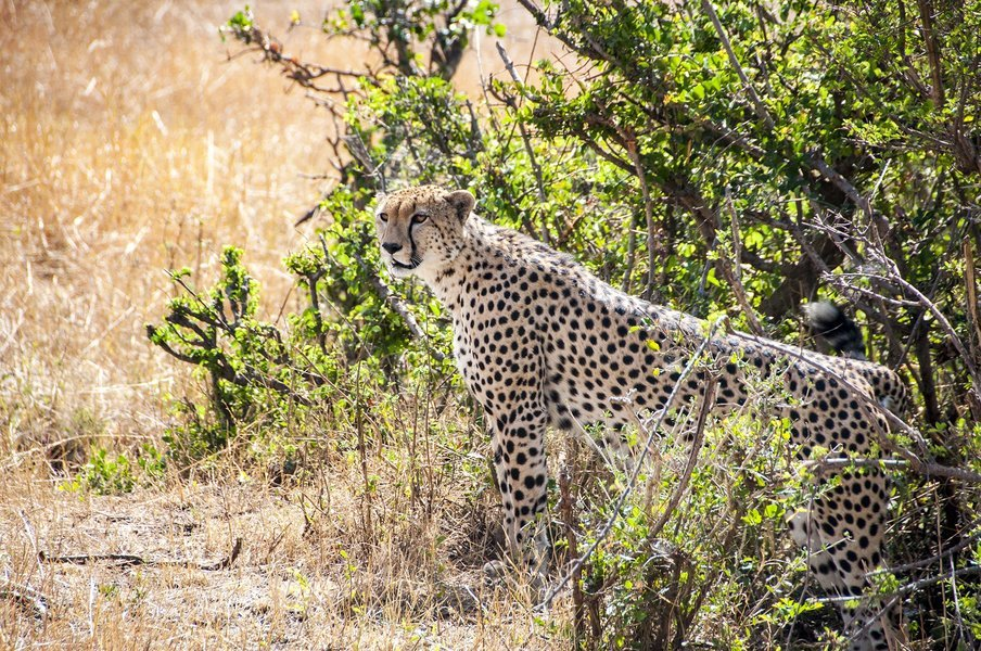 Tanzania Classic Lodge Safari - Tour