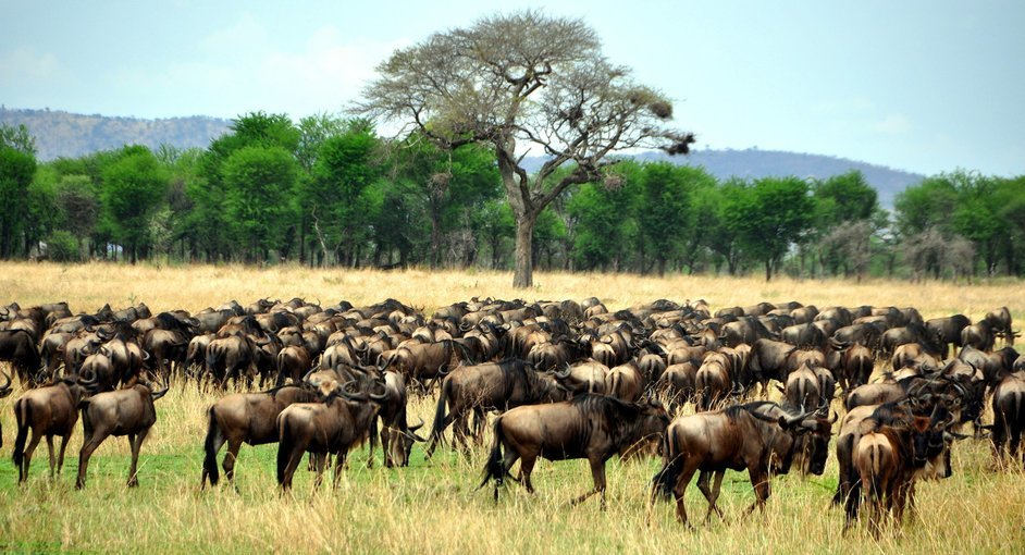 The Big Migration Safaris - Tour