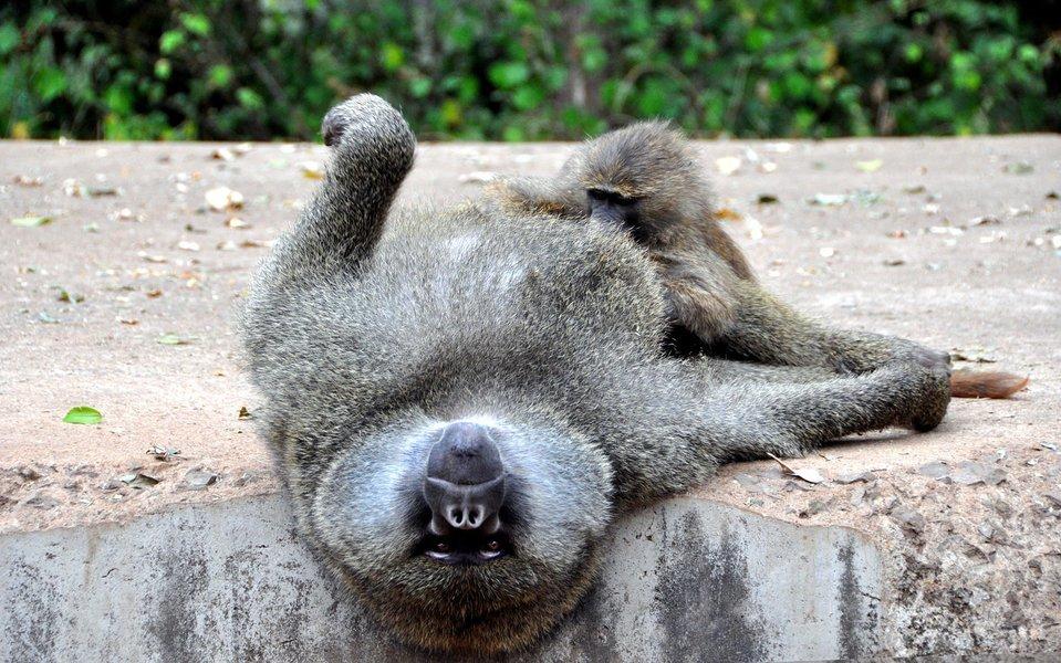 Tanzania – The Wild Side - Tour