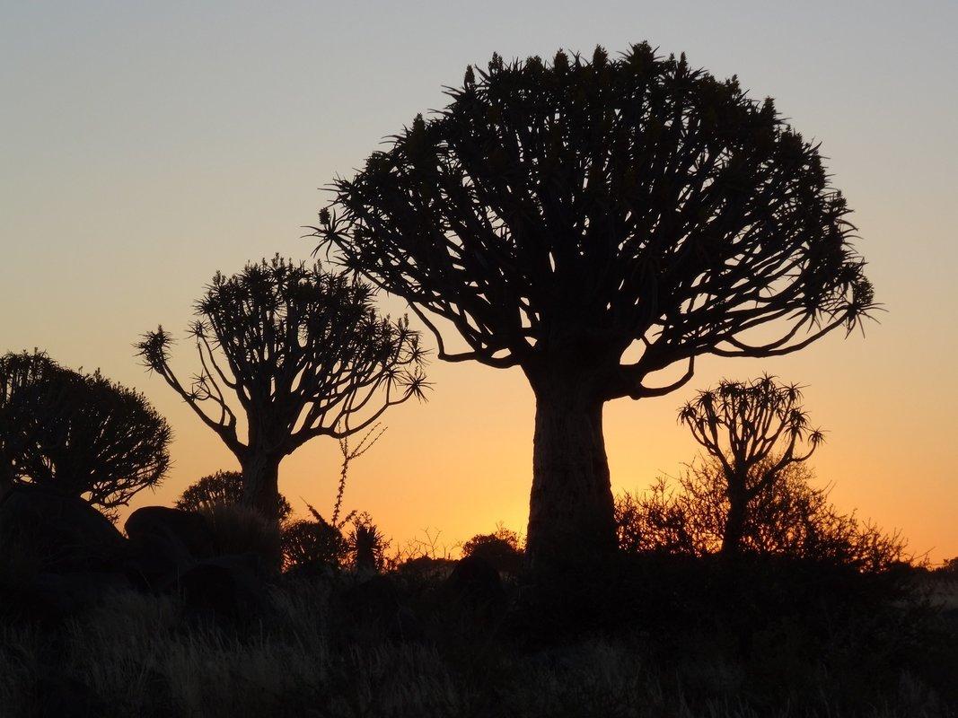 Namibia Tours - Collection