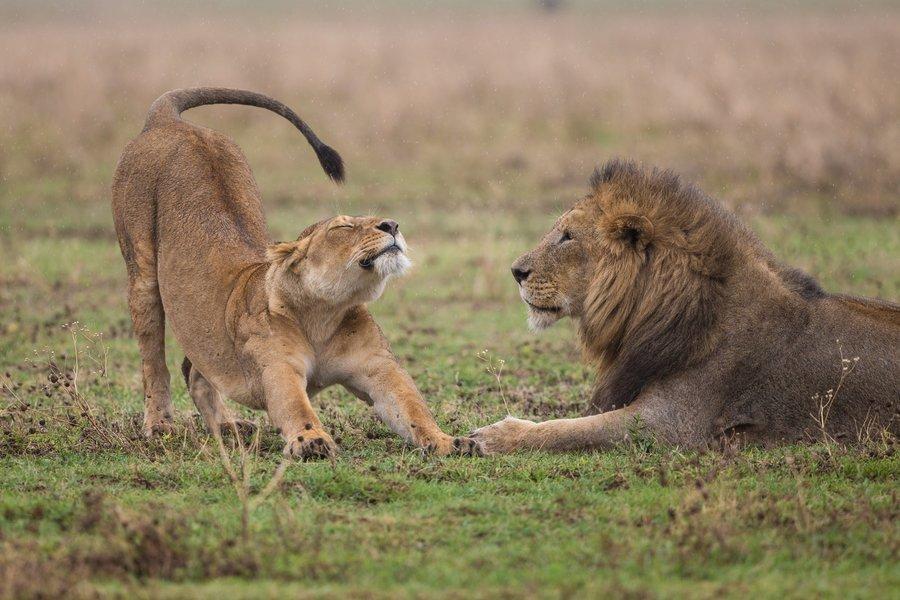 3 Days Serengeti and Ngorongoro LUXURY Safari from Arusha - Tour