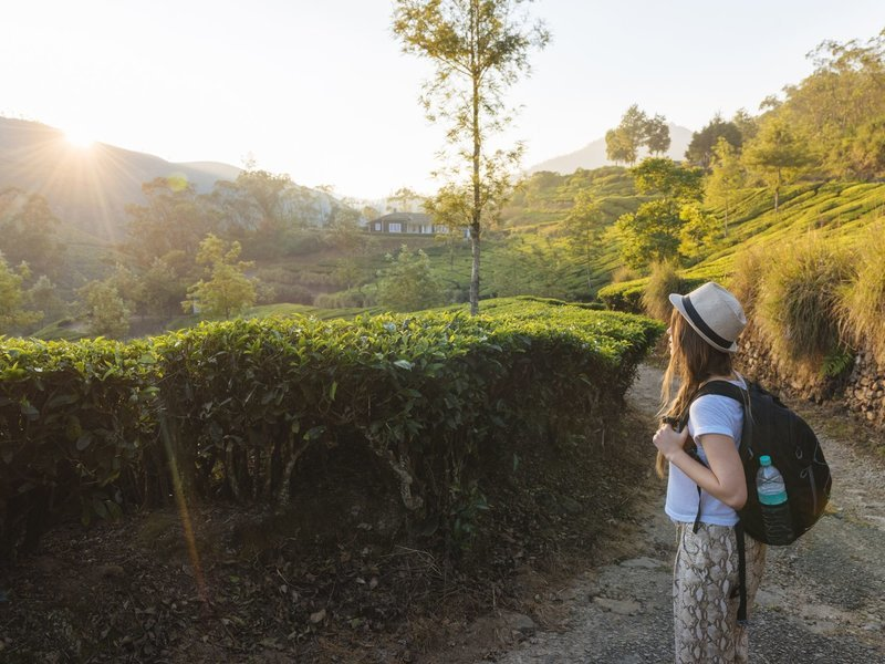Munnar Tea Plantation Walking Tour - Tour