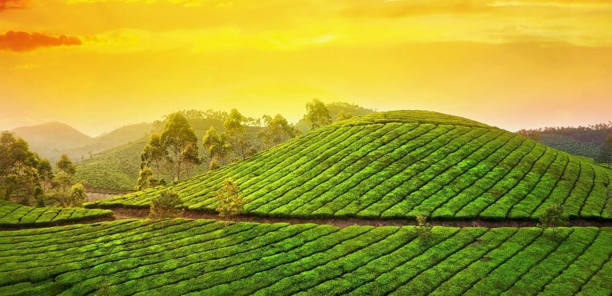 Munnar Tea Valley Tour (Half Day/Full Day) - Tour
