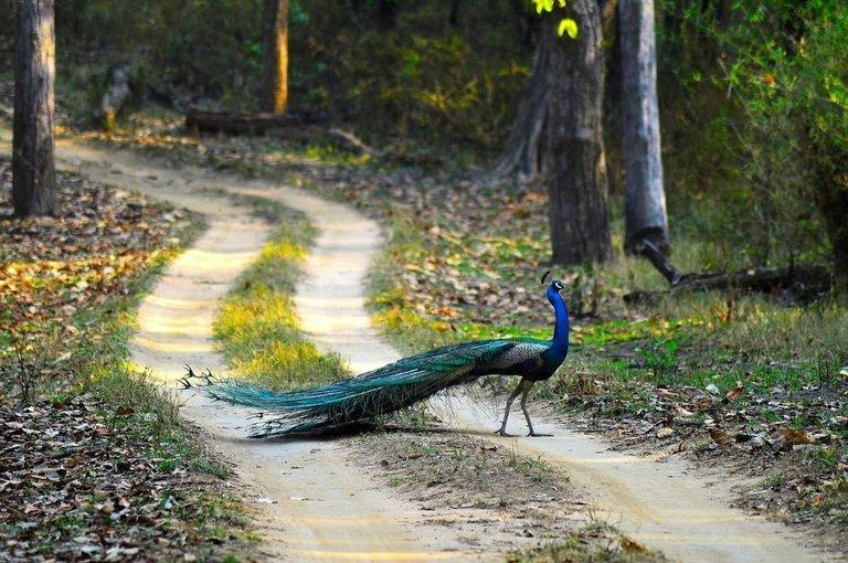 Jungle safari at orchha wildlife sanctuary - Tour