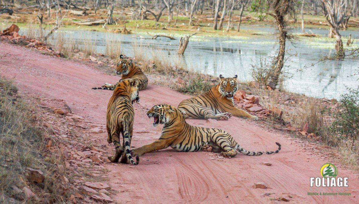 Ranthambhore Wildlife Camp