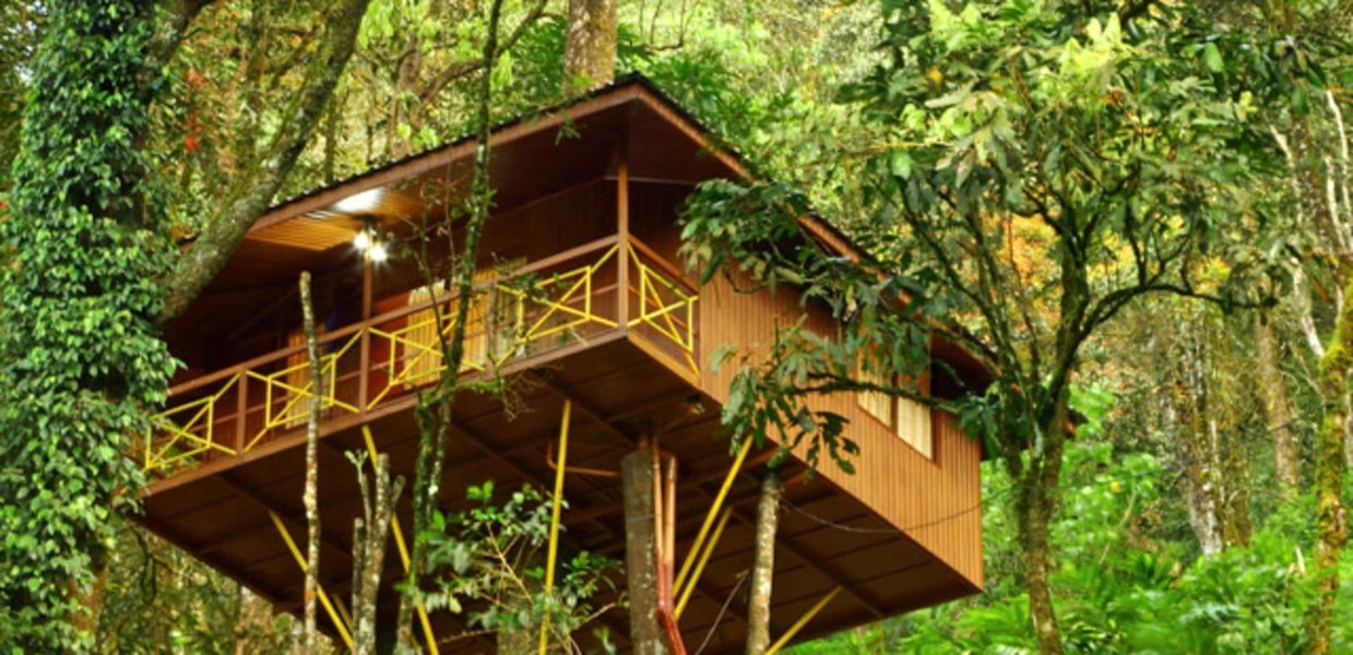 Overnight Tree House Stay in Wayanad - Tour