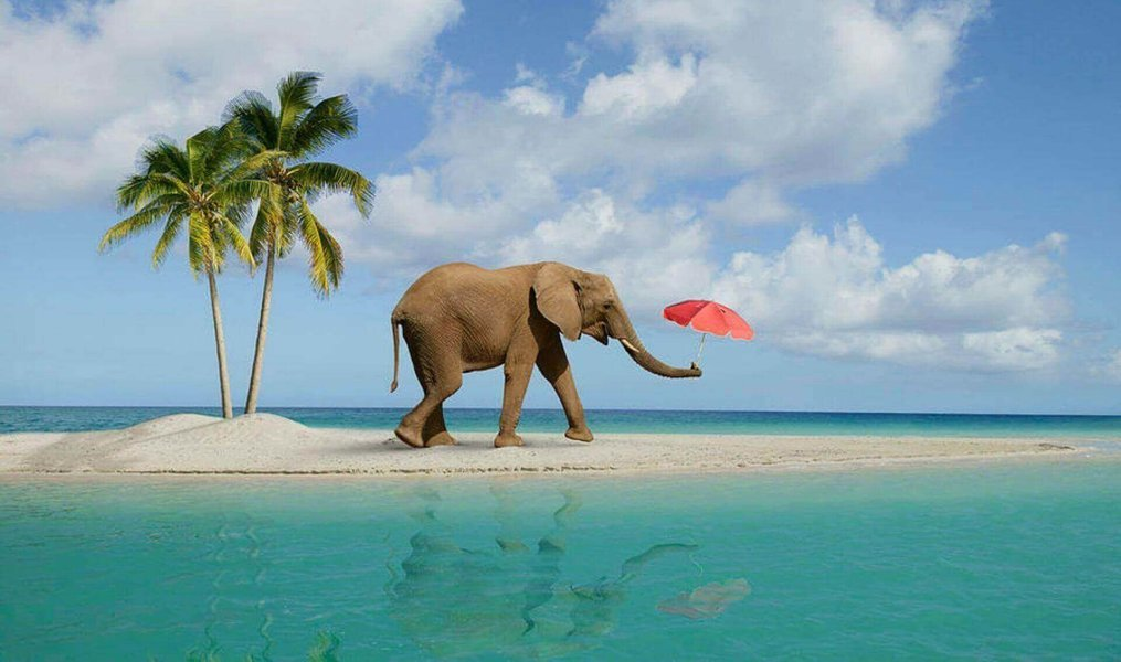 Elephant beach Boat Ride and Snorkelling – Havelock Island - Tour