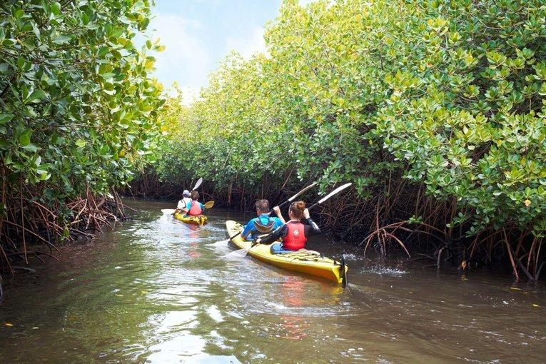 Mangrove Kayaking Tour – Havelock Island - Tour