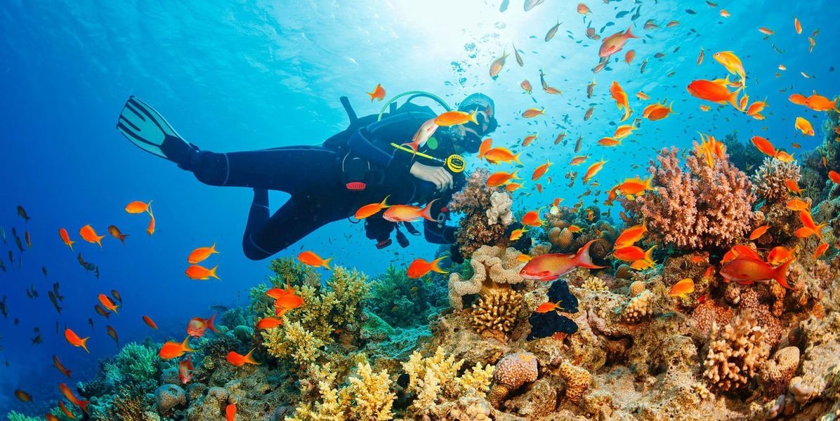 Scuba Diving With Photography – Havelock Island - Tour