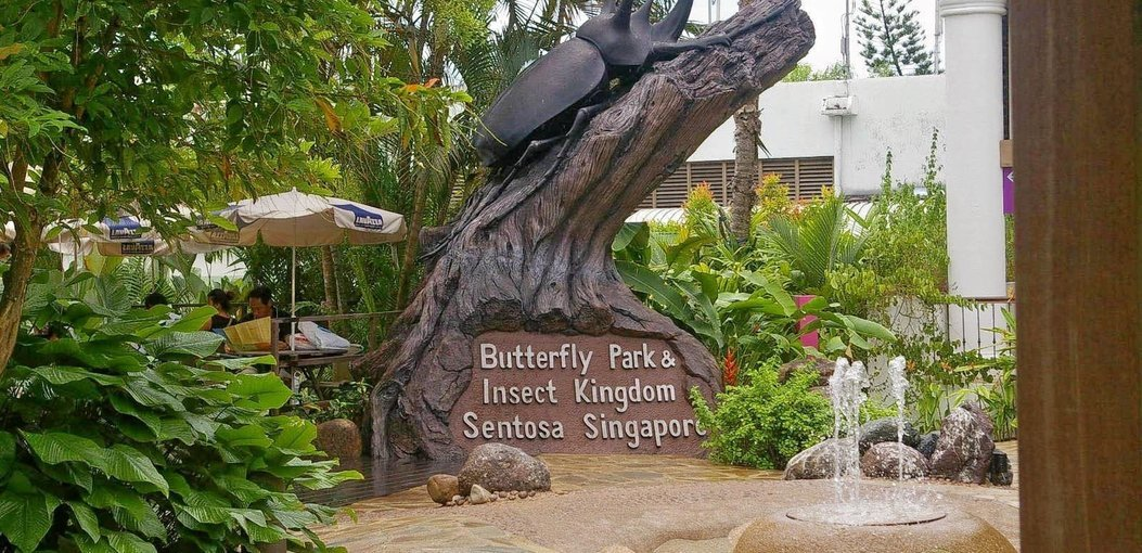Butterfly Park & Insect Kingdom - Tour