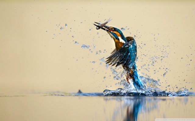 North Goa Bird Watching Tour - Tour