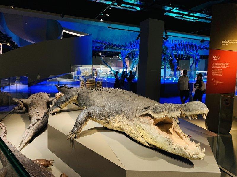 Lee Kong Chian Natural History Museum - Tour