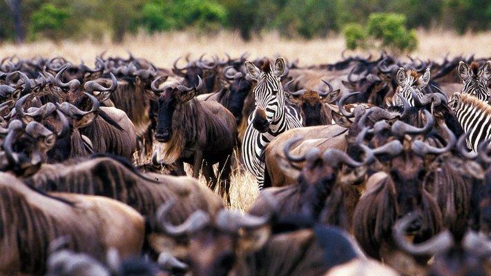Kenya Tanzania Adventure - Tour