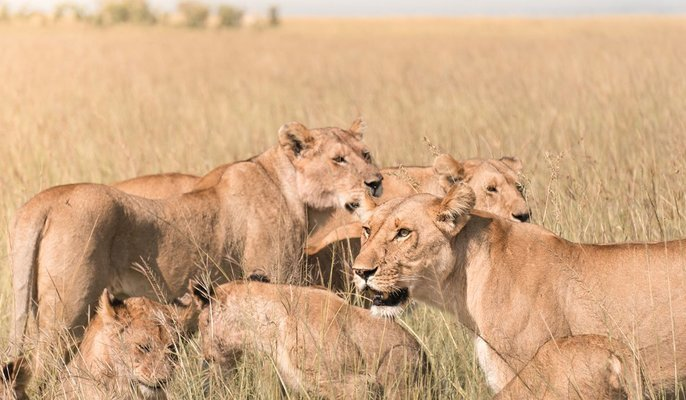 Kenya Adventure Safari - Tour